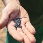 Semillas de Cebolla Dulce Fuencampo